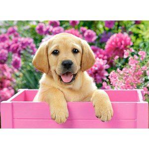 Castorland - Бебе лабрадор в розова кутия - 300 части - картина